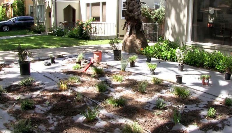 Lawn removal- plants