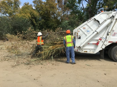 Crews remove invasive vegetation from Creek.