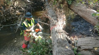 Crews remove fallen trees from creek.