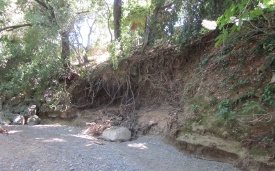 BEFORE: eroded creek bank along Stevens Creek