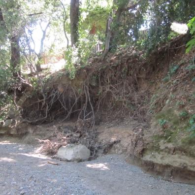 BEFORE: eroded creek bank along Stevens Creek