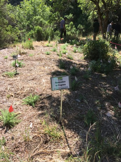 Foothills Park Riparian Enhancement Project