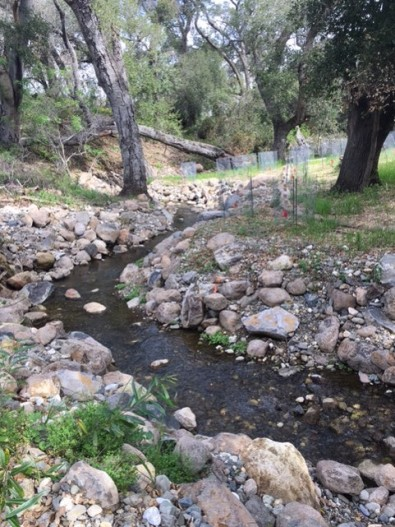 Stream Stabilization and Habitat Enhancement Phase 2 at Vasona Creek