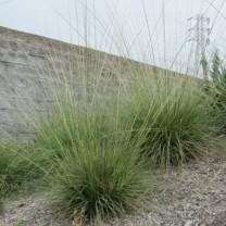 Photo credit: Green Meadow Growers