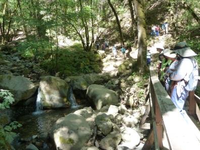 Bay area older adults - UvasCanyonHike1 creek and waterfall