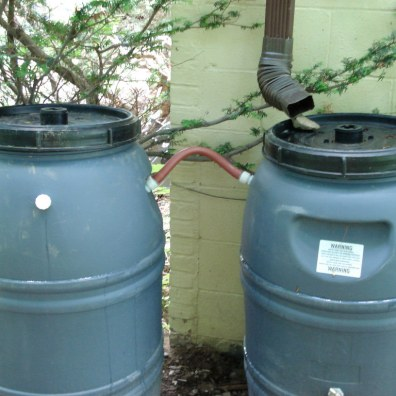 rain barrels - green house