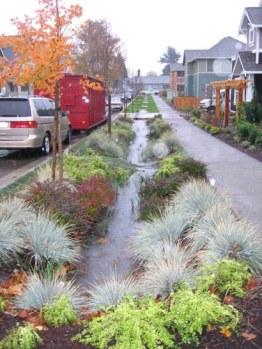 raingarden street strip