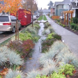 raingarden street strip